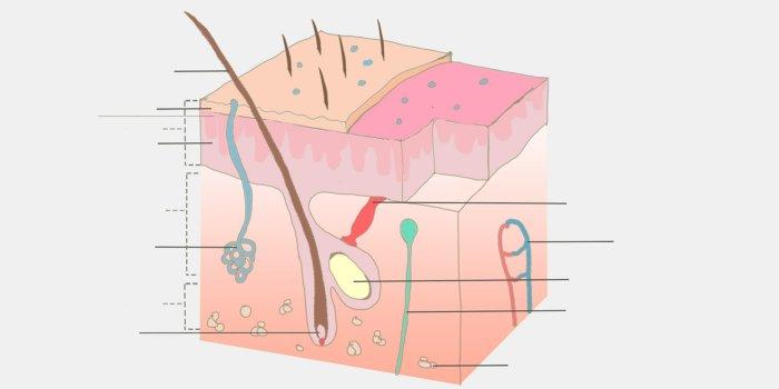 Anatomy 439990 1920