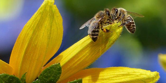 Bee 1575236 1920