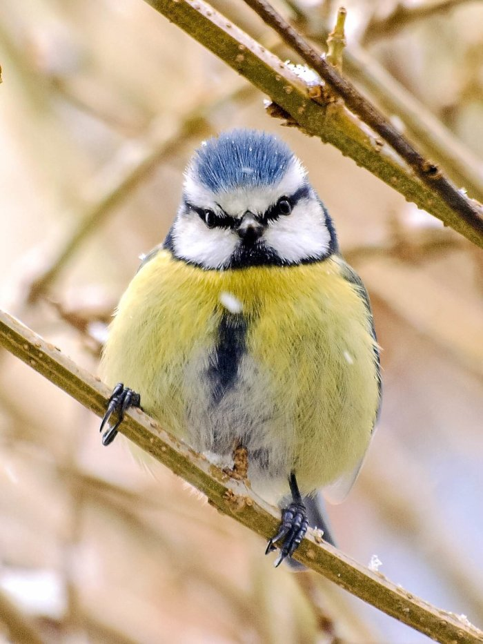 Birds Learn From Each Other's 'disgust', Enabling Insects To Evolve Bright Colours