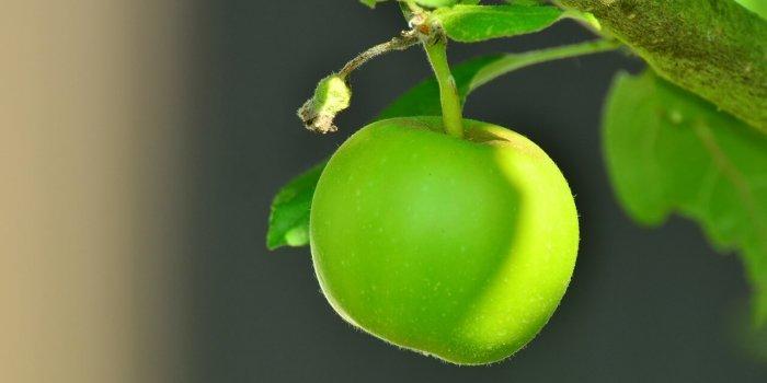 Apple 1532055 1280