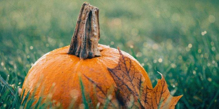 Pumpkin 1030817 1920