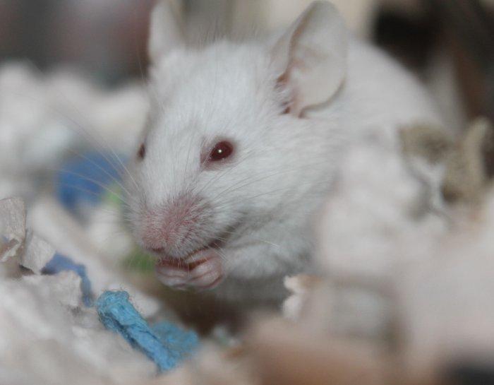 Je Konec Testování Na Zvířatech V Dohlednu?