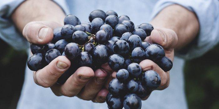 Grapes 690230 1920