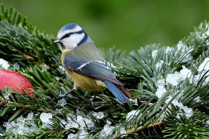 Jak Krmit A Jak NEKRMIT Ptáky?