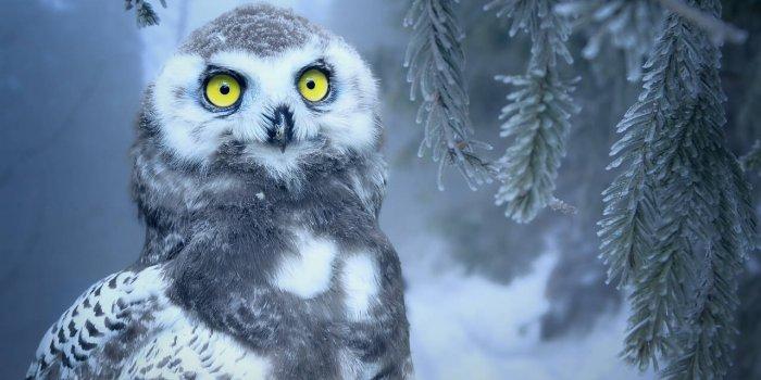 Owl 3184032 1280