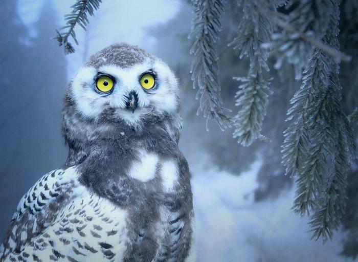 Národní Muzeum Láká Děti: Poznejte život Zvířat V Zimě