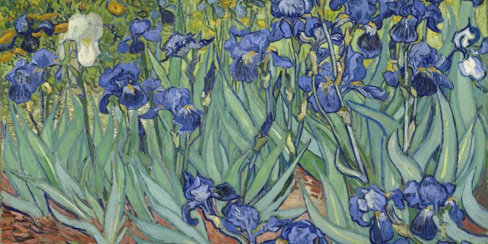 Vincent Van Gogh - Irises (Kosatce) (1889). Vincent Van Gogh [Public Domain], Via Wikimedia Commons