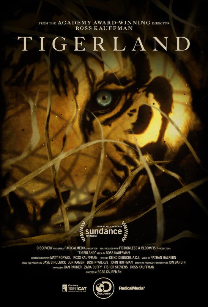 Země Tygrů: Ochrana Národního Parku A úspěch Na Festivalu Sundance