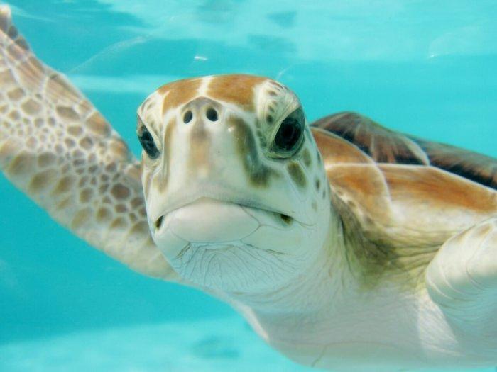23.5. – Světový Den želv