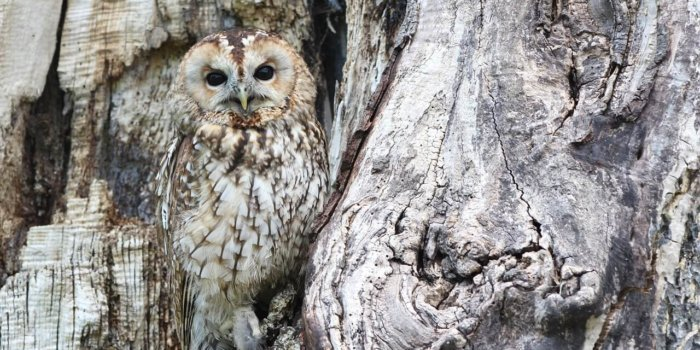 Owl 1576572 1280