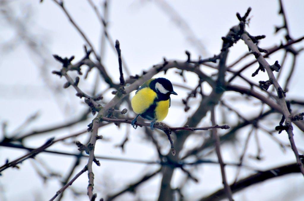 šťavnaté velké ptáky