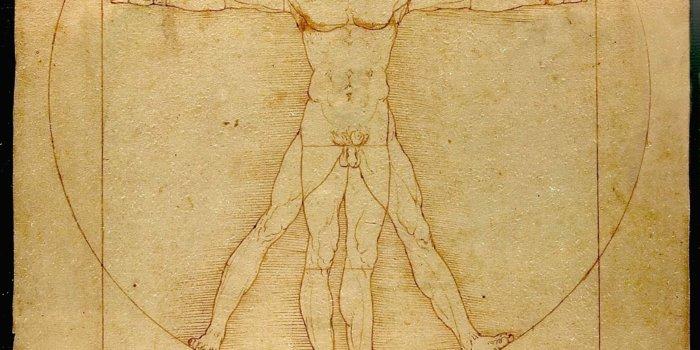 Vitruviánský Muž (snímek Pořídil Luc Viatour / Https://Lucnix.be)