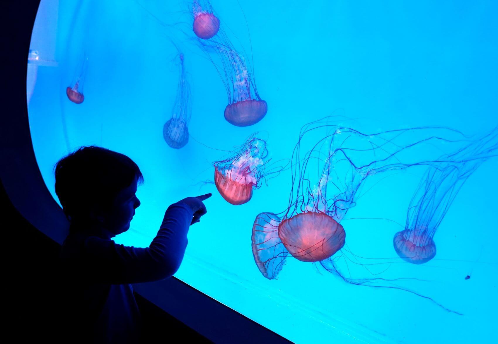foto Svět medúz