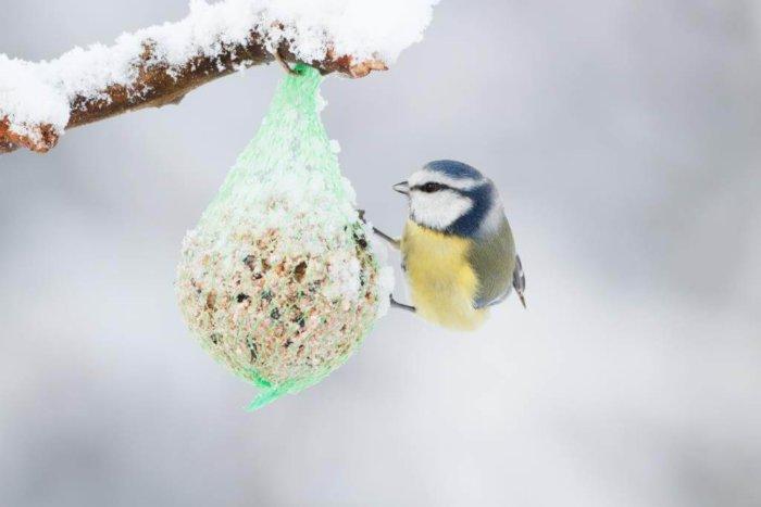 Jak Krmit Ptáky? Poradí V Botanické Zahradě Praha