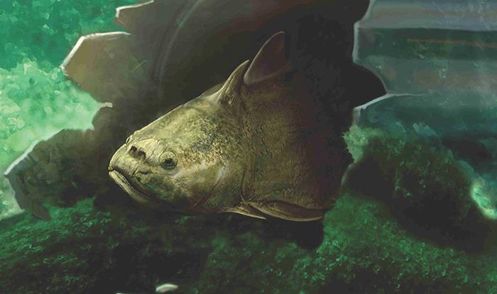 Zkameněliny Z Národního Muzea Změnily Pohled Na Počátek Evoluce Zubů