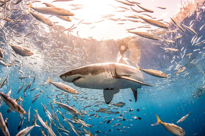 Žraloci I Letos V Srpnu Připlují Na Discovery Channel