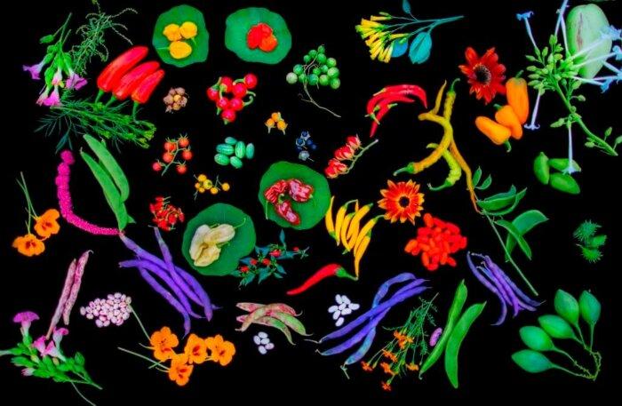 Venkovní Expozice Trojské Botanické Zahrady Představuje Plodiny Nového Světa
