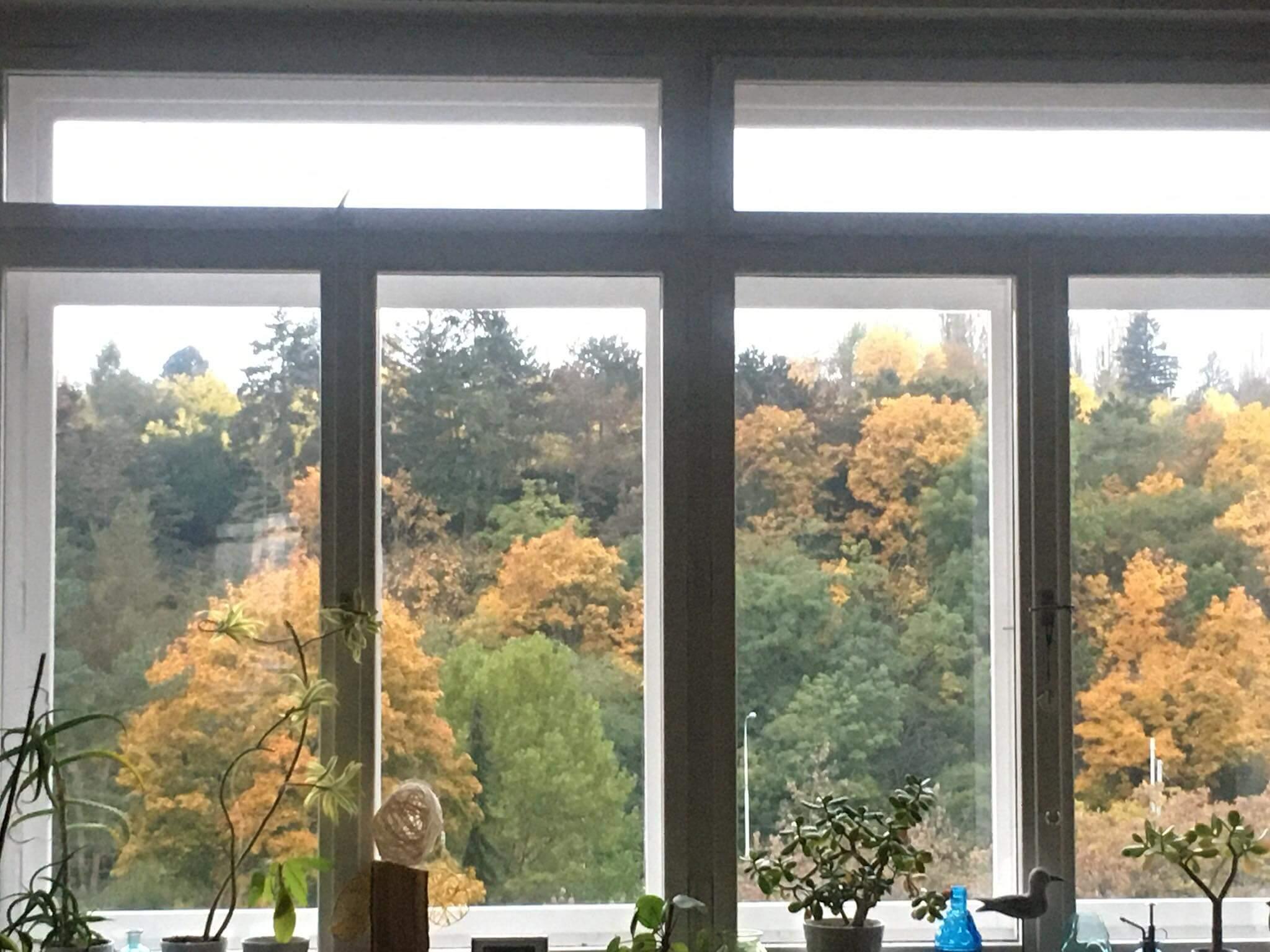 (výhled z okna při podzimní home office, foto AV)