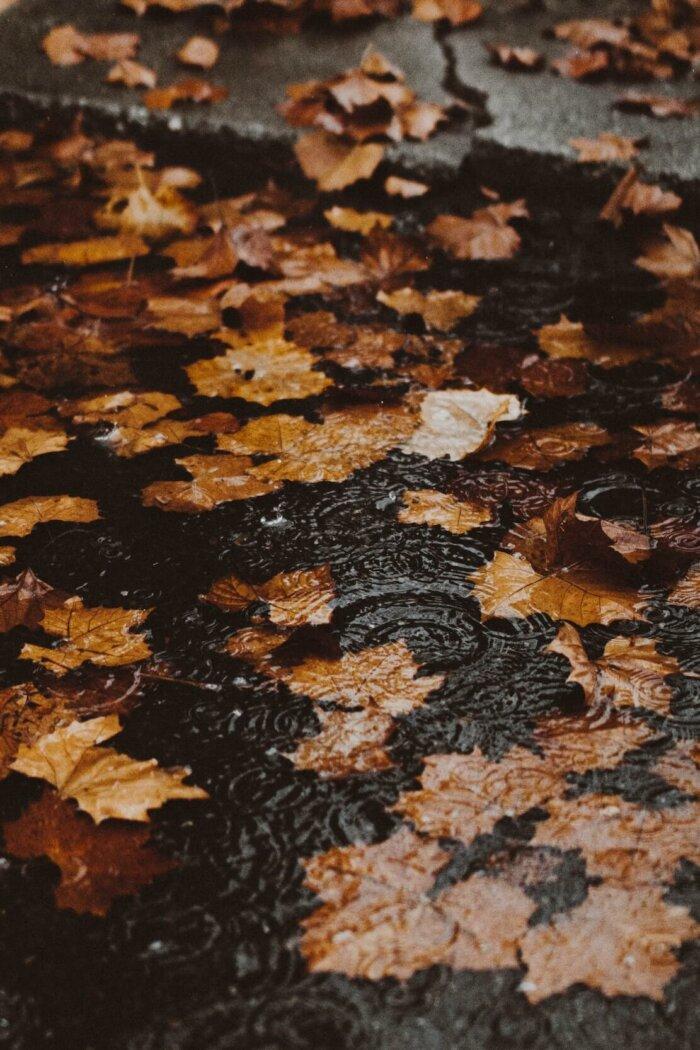 Podzimní Playlisty (8.)