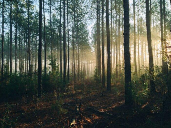 Audio Tip: Internetové Rádio, Co Vysílá Zvuky Lesů
