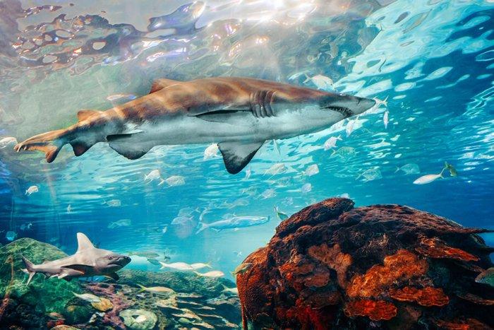 Na Discovery Běží Série Pořadů S Tématem žraloků