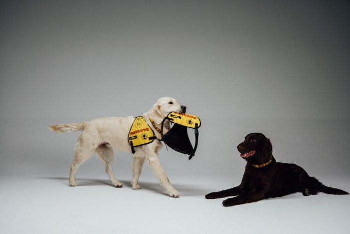 Asistenční Psi Z Neziskové Organizace Helppes Pomáhají Už 20 Let