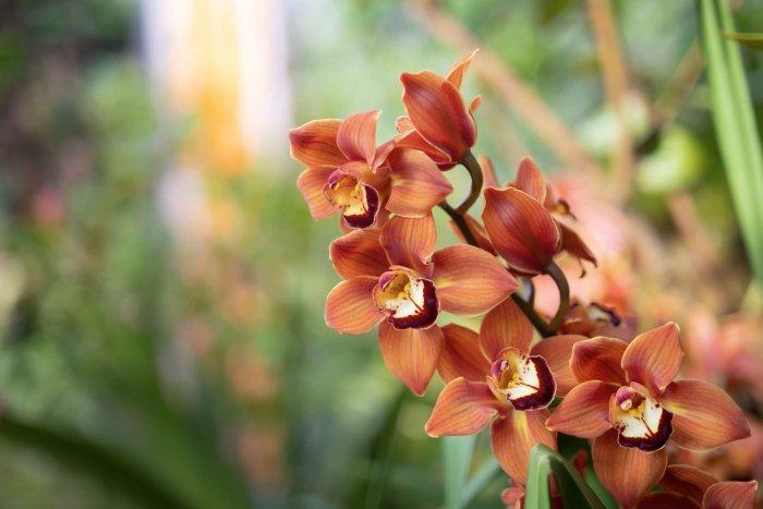 Ve Skleníku Fata Morgana V Troji Startuje Oblíbená Výstava Orchidejí