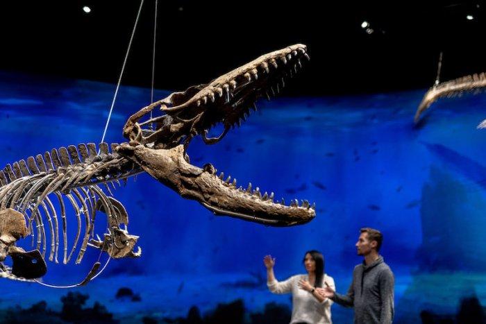 Nové Muzeum Dinosaurů Vás Vezme 200 Milionů Let Do Minulosti